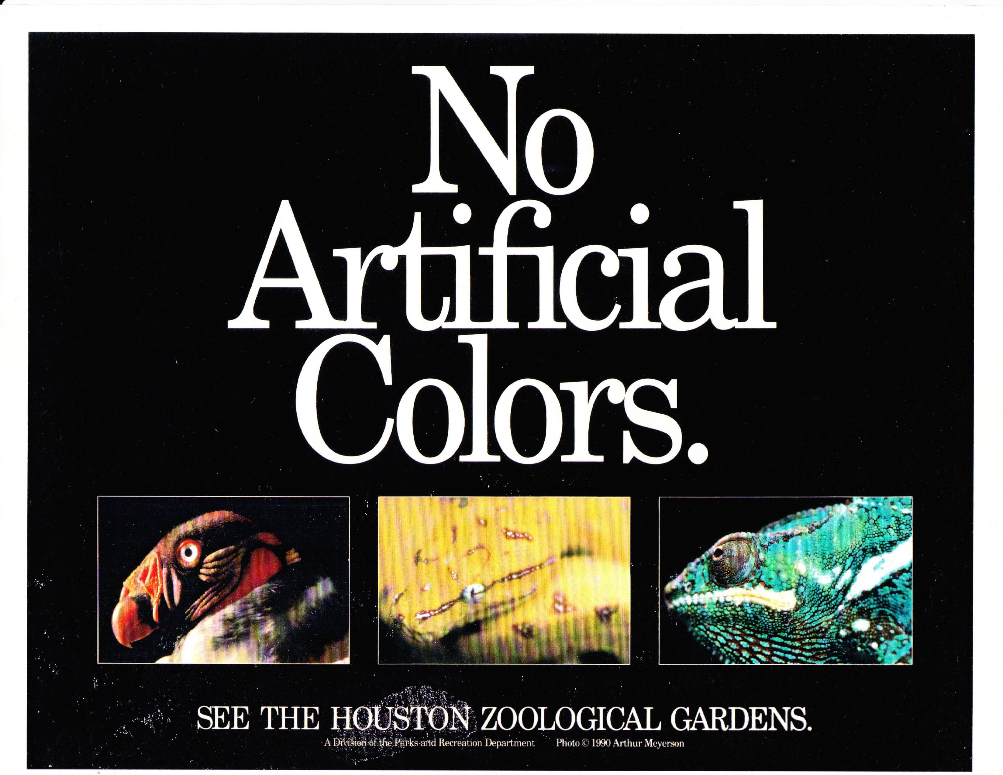 "Houston Zoo Ad with large ""No Artificial Colors"" and below it a red crested vulture, a yellow snake, and a greek bug-eyed lizard (small)"